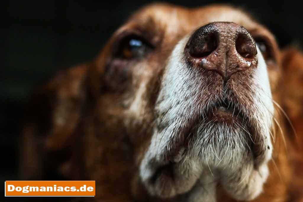 Demenz Beim Hund Einschläfern